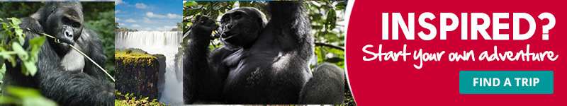3 Days Congo Gorilla Safari