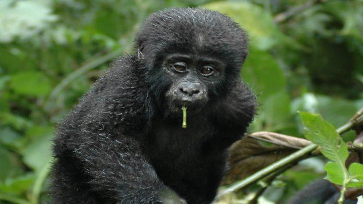Congo Tourist Visa