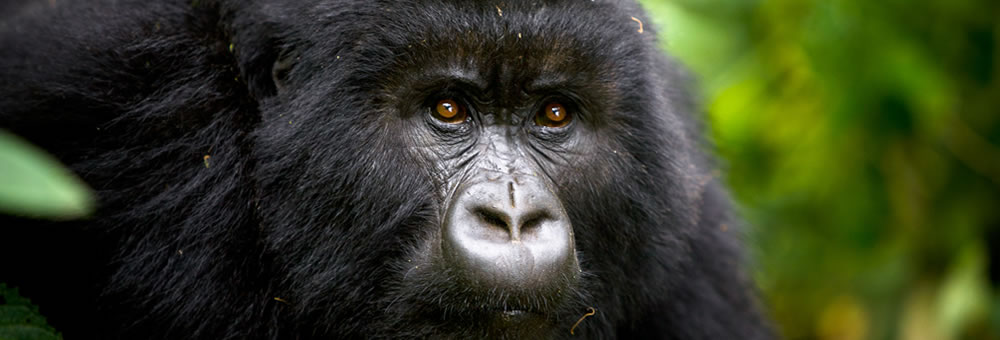 Virunga National Park Adventure